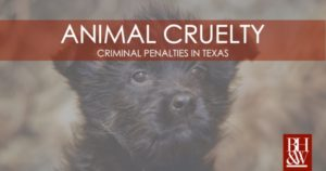 Animal Cruelty Texas Animal Abuse